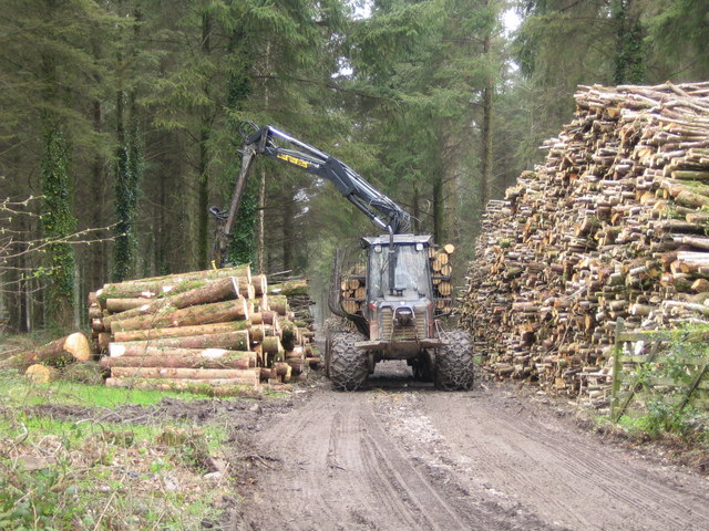 Logging in Moorlands Wood