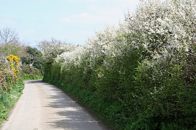 Country Lane in the Spring