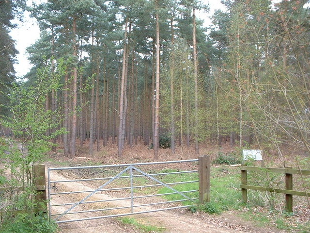 Entrance to White Hills wood.