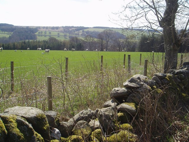 Milton Wood