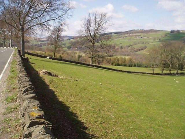 Quarry Wood