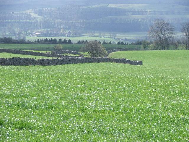 Farmland near Carperby.