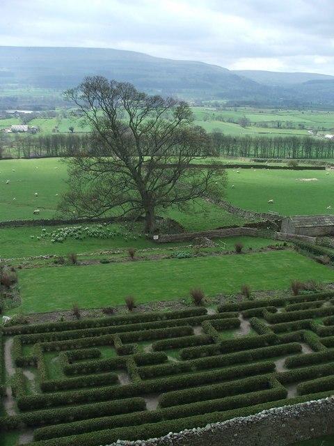 Maze and tree Bolton Castle.