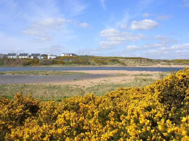 Gorse at the Mouth of the River Don