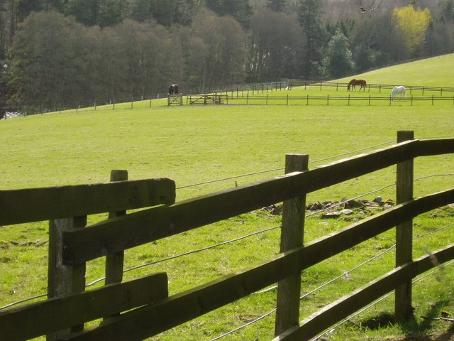 Horses near Yarrowford