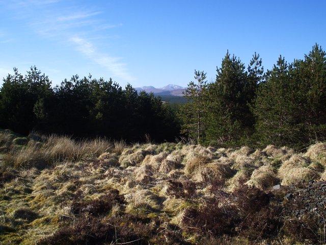 Dalchork Wood