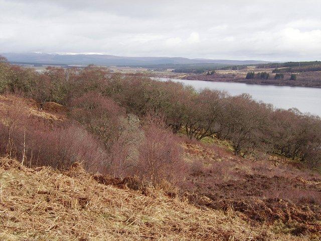 Woods, Loch Shin