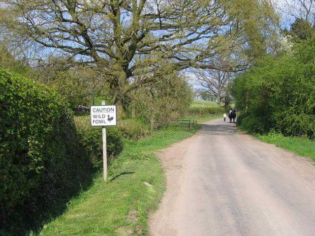Wild Fowl, Clarke's Green
