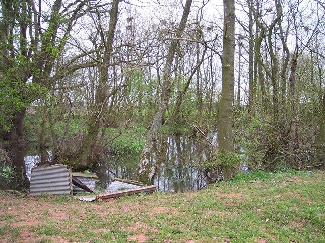 Pond and Rookery near Newbury Farm