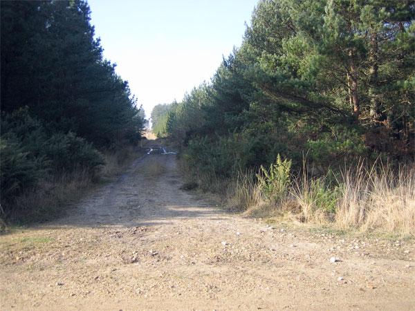 Forest track near Bere Regis