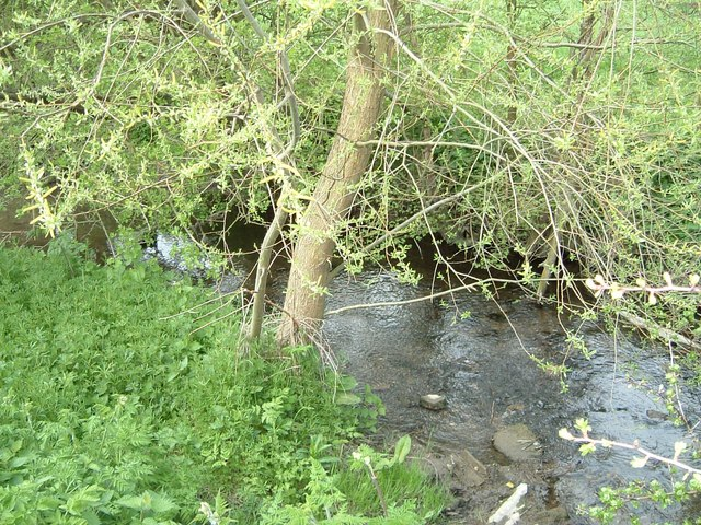 Stream, Swan's Way