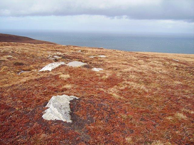 Coastal moorland.