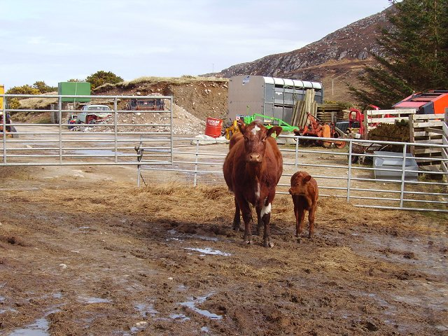 Farmyard in Strath Melness