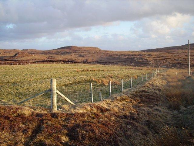 Field, Aultivullin.