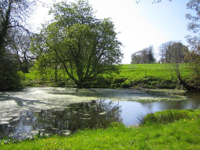 The Pond by Pond Farm