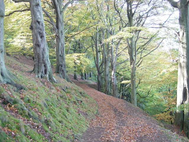 Beech Avenue on North side of Wrekin