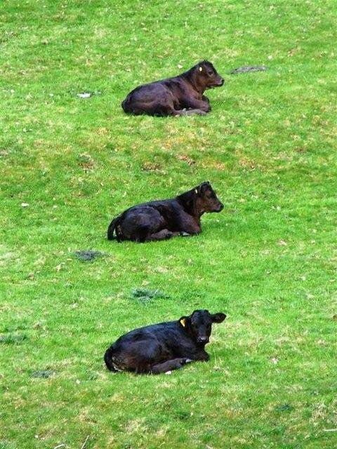 Pasture at Beltingham