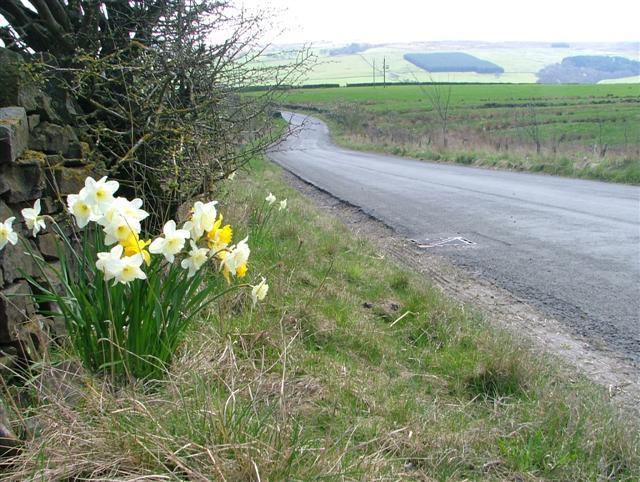 Unclassified Road, Ramshawfield