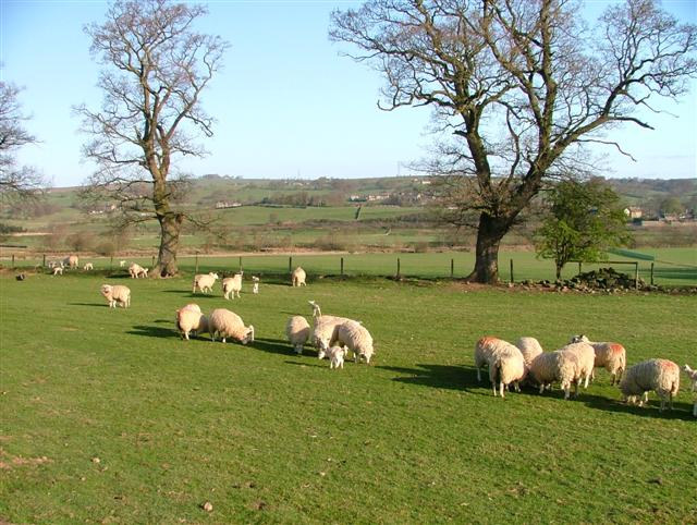 Grazing, Willimotewick Farm
