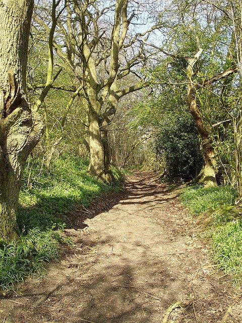 Track to Scragged Oak