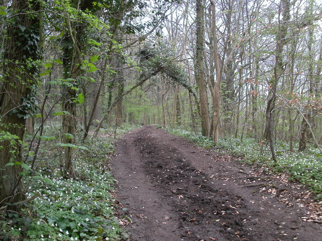 Cotswold Way path in Standish woods