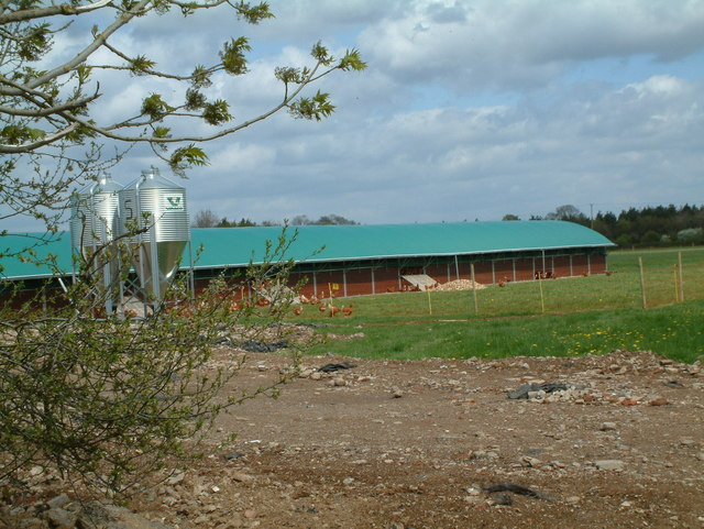 Chicken Farming, Alderholt