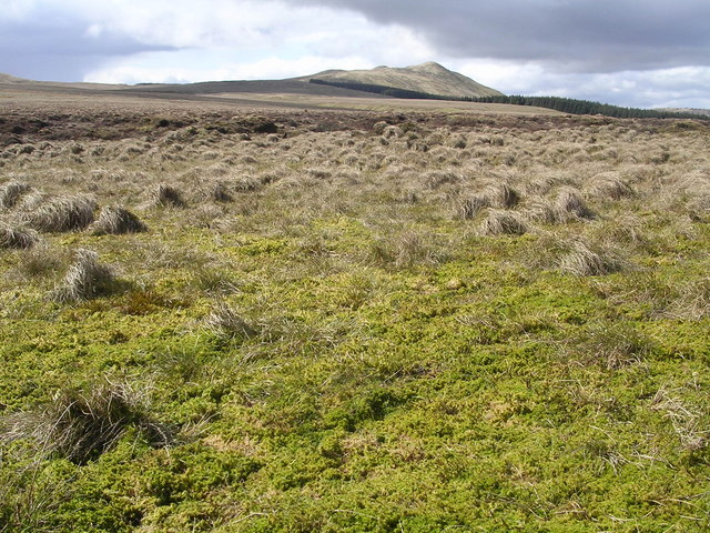 Emerald Green Bog at Gray Mare