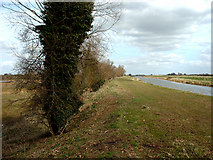 TF1707 : River Welland at edge of Deeping Lakes NR by Terry McKenna