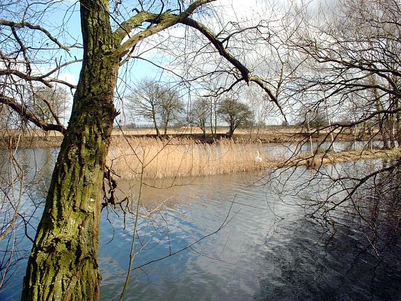 Deeping Lakes NR near Peterborough