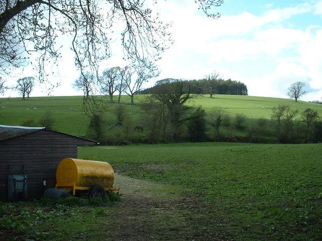 High Park Wood near Kirkby Lonsdale