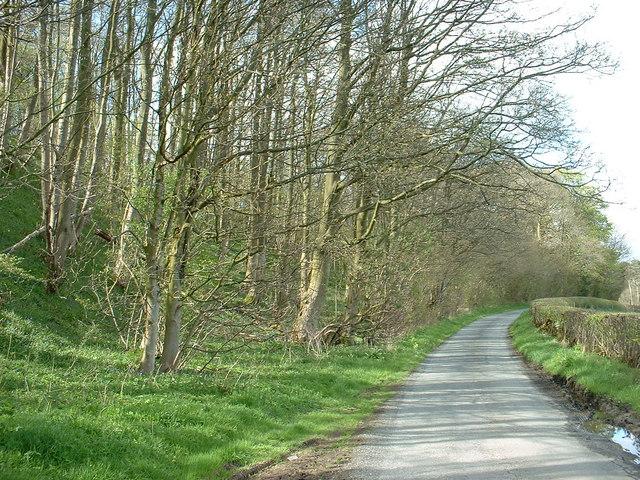 Fleshbeck Wood