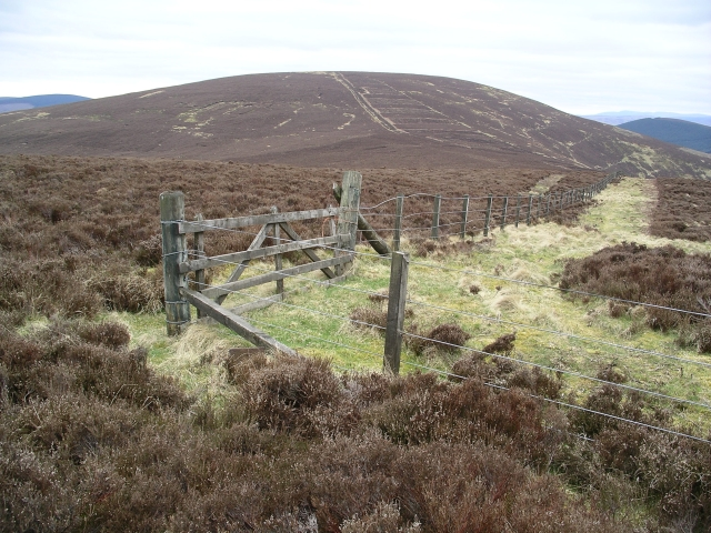 Gate and fence, Maiden Law