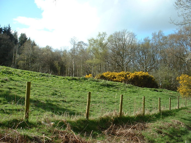High Rigg Brown (wood)