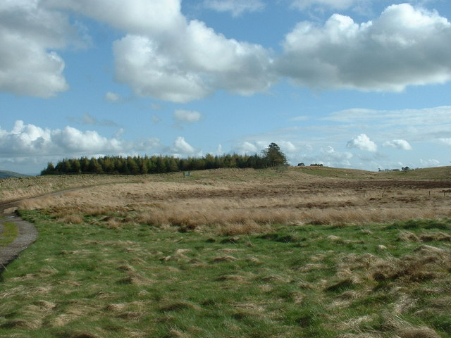 Egholme Peat Moss