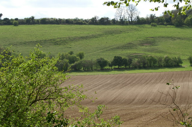 Chalkland Valley, Compton Down