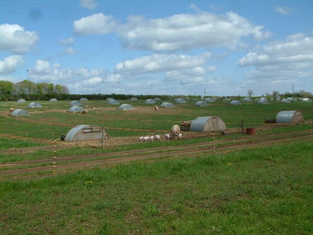 Pig Farm, west of Damerham