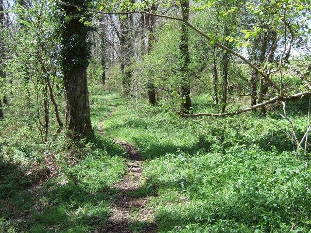 Chenson woods