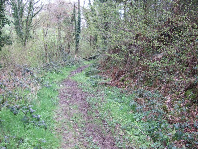 Footpath in the woods at Eggesford