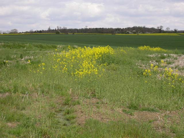 Countryside near Swineshead Wood