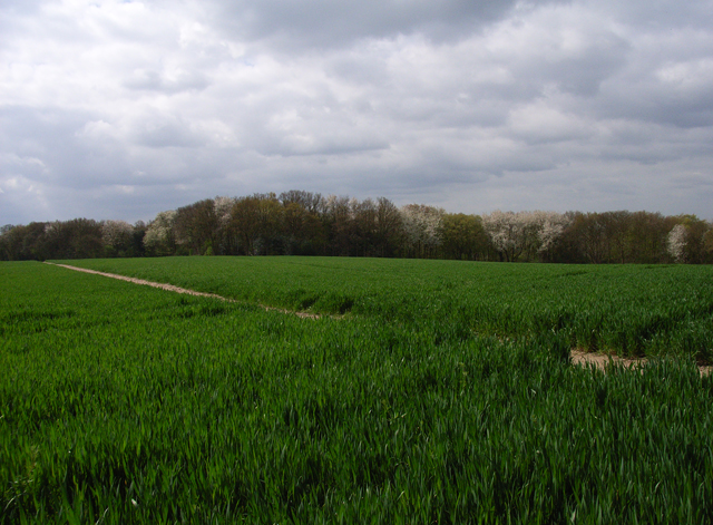 Farmland above Wooburn Green