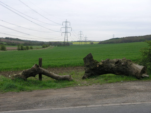 Tree Trunk and Pylons