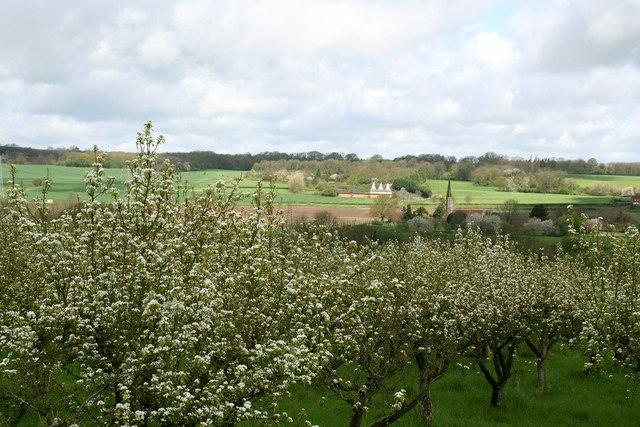 Orchards in the Medway valley
