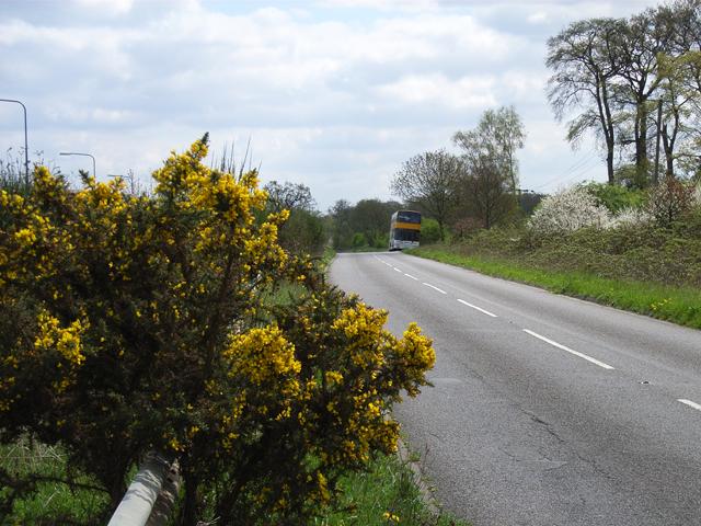 Hedgerley Lane, near Beaconsfield