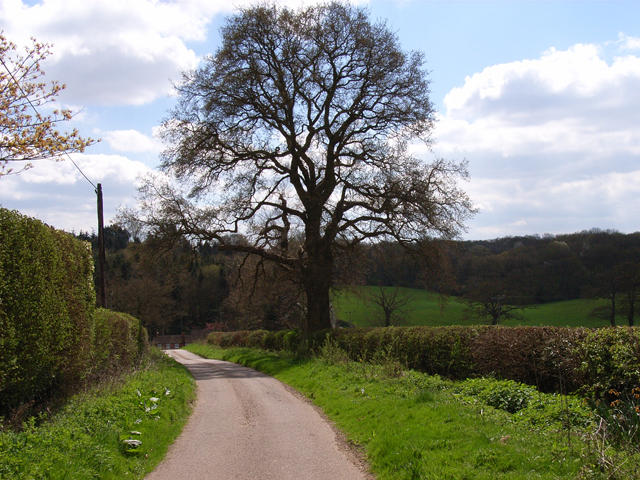 Andrew Hill Lane, Hedgerley