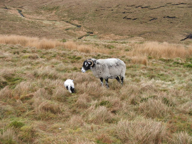 Ewe and Lamb on Ouster Hill.