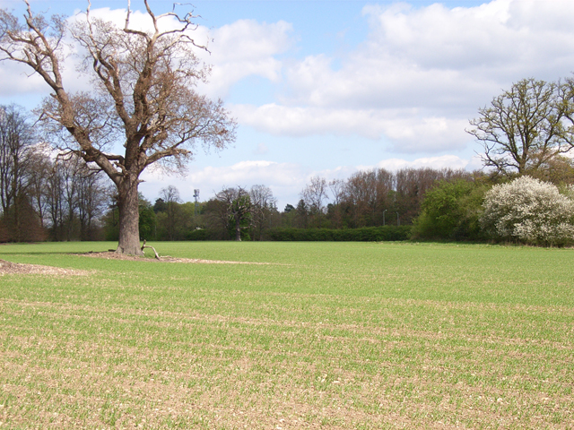 Farmland near Beaconsfield