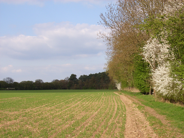 Farmland next to Dipple Wood
