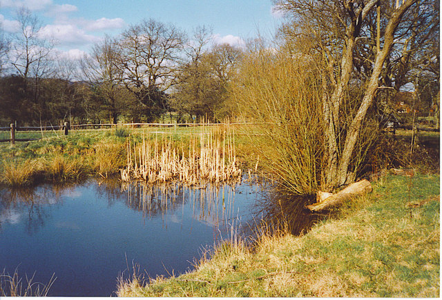 Pond in Walliswood Nature Reserve