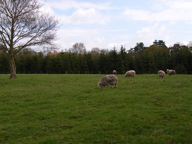 Farmland at Farnham Royal