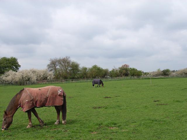 Fields at Farnham Royal